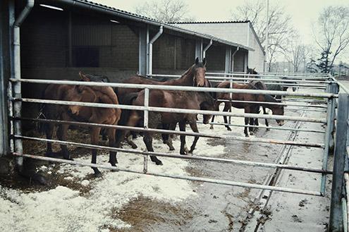 paarden_buiten